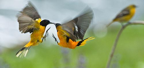 Backyard aerial combat