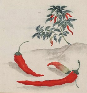 Red peppers with plant growing in the background