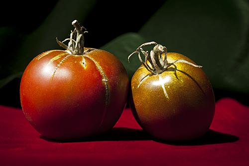 Nepal, TomatoTown, Varieties