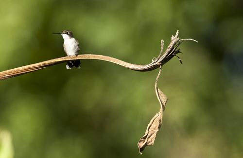 Diminutive Aerial Acrobat