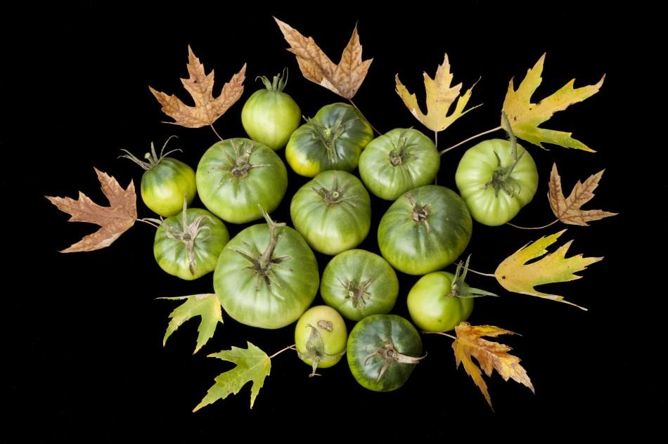 An Unripe Harvest