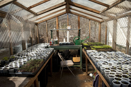 James' Greenhouse Filled With Pepper and Tomato Seedlings