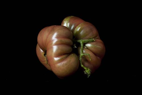Purple Calabash MUTANT