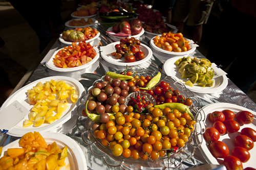 A colorful selection of tomatoes.