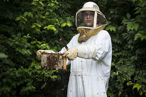 Beekeeper Mark checks on the honeycomb forming on a hive frame.