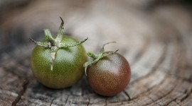 Two, count them, two ripe Black Cherry Tomatoes.